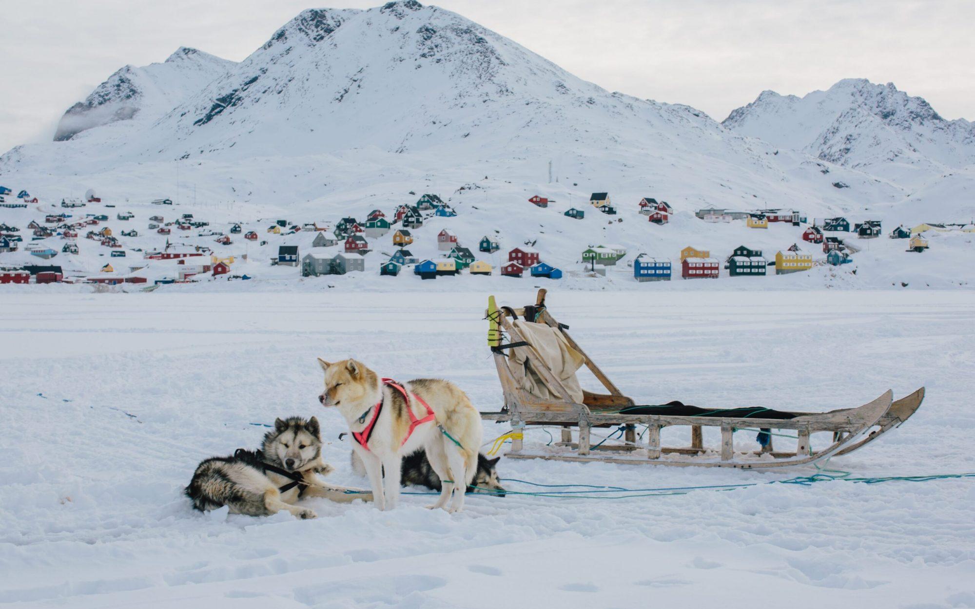 Sled dogs Taking a Break-min