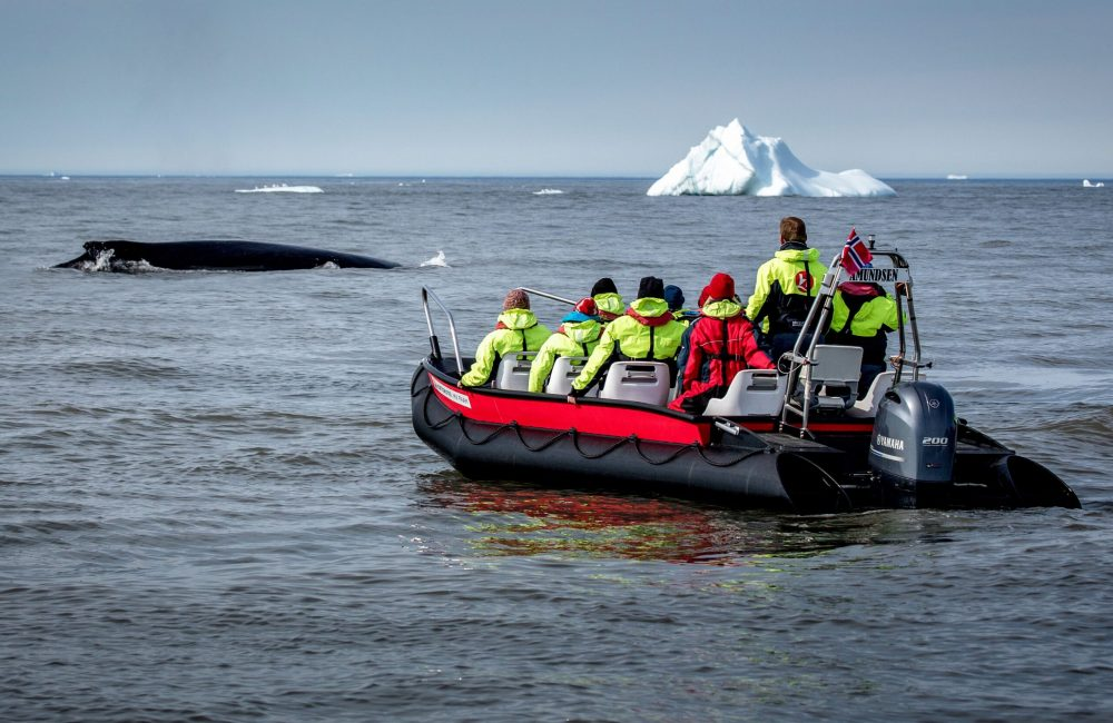 Whale safari with MS Fram guests near Qeqertarsuaq in Greenland-min