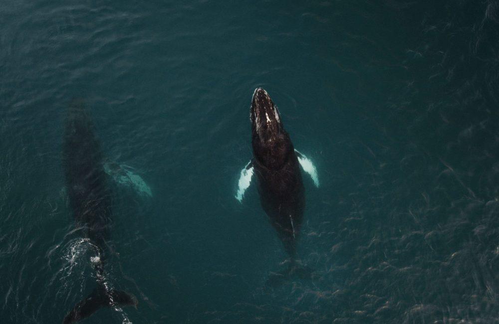 Whales-min